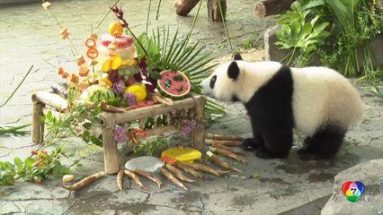 ฉลองวันเกิดแพนด้ายักษ์ อายุครบ 8 ปี ที่สวนสัตว์ในจีน