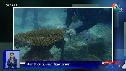 เสียหายหนัก! ปะการังอ่าวมาหยา ถูกคุกคามจากเศษอวน-ขยะทะเล จนใกล้ตาย