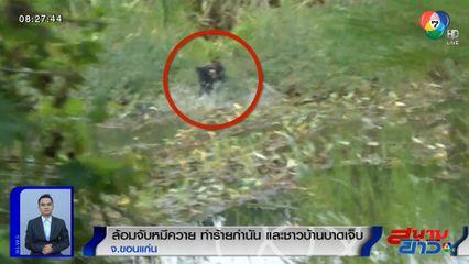 ล้อมจับหมีควายโผล่กลางไร่อ้อย ทำร้ายกำนัน-ชาวบ้าน บาดเจ็บ 5 คน