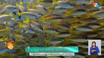 เปิดภาพสวยงามใต้ทะเล ฝูงปลากะพงข้างเหลืองนับแสนตัว จ.กระบี่