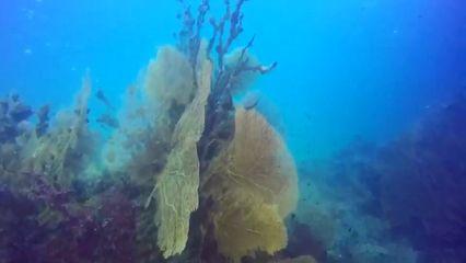 ชมความงามท้องทะเลฝูงปลาสากคลีบดำนับหมื่นที่กระบี่