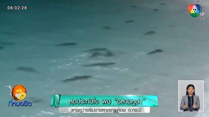 สุดประทับใจ พบฉลามหูดำ แหวกว่ายริมชายหาดเกาะห้อง จ.กระบี่