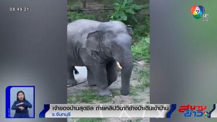 ภาพเป็นข่าว : เจ้าของบ้านสุดชิล ถ่ายคลิปวินาทีช้างป่าเดินเข้าบ้าน