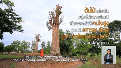 คมธรรมประจำวัน : คารวะต้นไม้