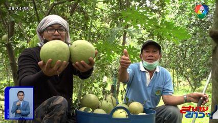เจษฎาโอ้โฮ : ลุยสวนส้มโอสูงเนิน จ.นครราชสีมา