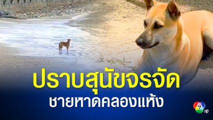 เร่งจัดการสุนัขจรจัดพ้นหาดคลองแห้ง หลังกัดเด็กนักท่องเที่ยวเจ็บ