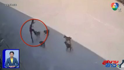 ภาพเป็นข่าว : ถอยดีกว่า! หมาหมู่ หรือจะสู้คนจริง