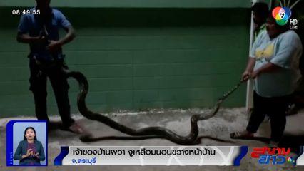 ภาพเป็นข่าว : เจ้าของบ้านผวา งูเหลือมนอนขวางหน้าบ้าน จ.สระบุรี