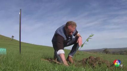 รายงานพิเศษ : โครงการปลูกต้นไม้ทดแทน จากเหตุไฟป่าในออสเตรเลีย