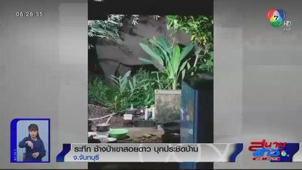 ภาพเป็นข่าว : ระทึก ช้างป่าเขาสอยดาว บุกประชิดบ้าน