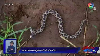 ภาพเป็นข่าว : สุดแปลก... พบงู 2 หัวในอินเดีย