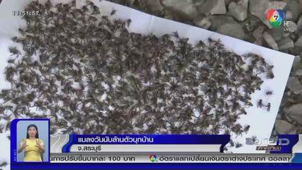 รายงานพิเศษ : แมลงวันนับล้านบุกบ้านที่ จ.สระบุรี