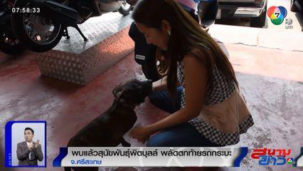พบแล้ว! สุนัขพิตบุลล์ อายุ 3 เดือน พลัดตกท้ายรถกระบะ หลังออกรายการสนามข่าวเพียง 1 ชม.