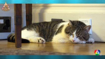 รายงานพิเศษ : แลร์รี แมวแห่งถนนดาวน์นิงสตรีท