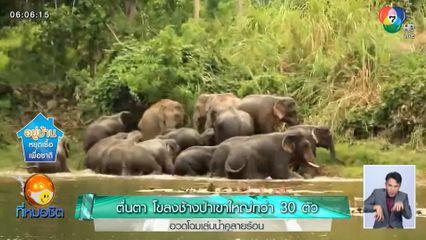 ตื่นตา โขลงช้างป่าเขาใหญ่กว่า 30 ตัว อวดโฉมเล่นน้ำคลายร้อน