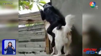 ภาพเป็นข่าว : สุนัขสอดรู้สอดเห็น ขี่หลังเพื่อนเผือกเรื่องชาวบ้าน