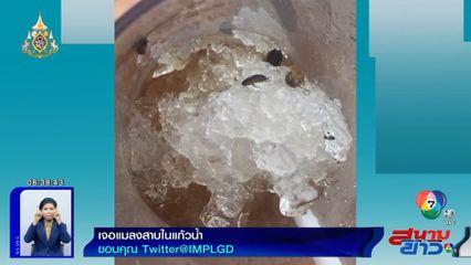 ภาพเป็นข่าว : แทบช็อก! เจอแมลงสาบในแก้วน้ำ ที่ศูนย์อาหารห้างดัง ย่านบางนา