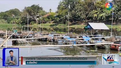 เกษตรกรโวยโรงงานปล่อยน้ำเสีย ปลาในกระชังตายต่อเนื่อง จ.เชียงใหม่