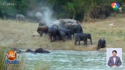 ตื่นตา โขลงช้างป่ากว่า 20 ตัว เล่นน้ำคลายร้อนในอุทยานแห่งชาติแก่งกระจาน