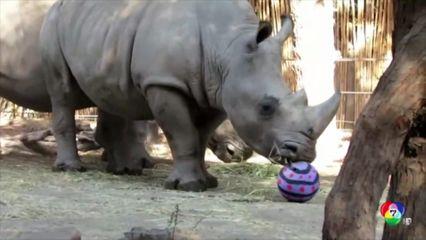 สวนสัตว์ในชิลีฉลองวันอีสเตอร์