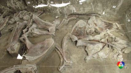 เม็กซิโก ค้นพบหลุมดักแมมมอธที่มนุษย์สร้างขึ้นอายุ 15,000 ปี