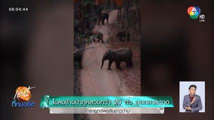 โขลงช้างป่าภูหลวงกว่า 20 ตัว ออกอาละวาดทำลายทรัพย์สินชาวบ้าน