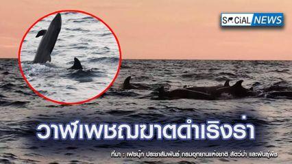 ภาพหาชมยาก! ฝูงวาฬเพชฌฆาตดำ แหวกว่ายอวดโฉม หมู่เกาะลันตาเป็นครั้งแรก