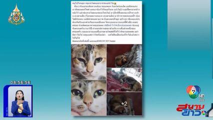 ภาพเป็นข่าว : เจ้าของวอนช่วยตามหาแมว กระโดดออกจากรถยนต์ จ.ร้อยเอ็ด