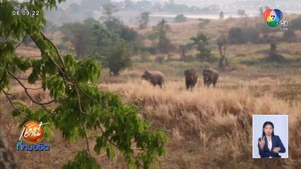 แล้งจัด! ช้างป่า 3 ตัว จากอุทยานแห่งชาติเขาใหญ่ ออกหากินใกล้หมู่บ้าน