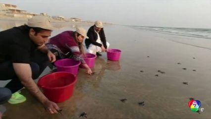 ปากีสถานปล่อยลูกเต่าตนุหลายพันตัวกลับสู่ทะเล
