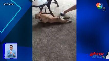 ภาพเป็นข่าว : แสนรู้! สุนัขเล่นมุกลากขาพิการ แกล้งลูกค้าในร้านอาหาร