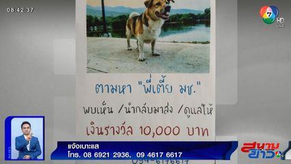 ภาพเป็นข่าว : วอนช่วยตามหา พี่เตี้ย สุนัขขวัญใจชาว มช.
