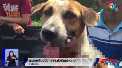 ช่วยเหลือสุนัขถูกคนใจร้ายปาดคอเป็นแผลฉกรรจ์ ชาวเน็ตรุมประณามคนก่อเหตุ