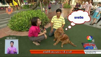 เพชรหอม พาชมความน่ารักของน้องหมาในงานรวมพลคนรักโกลเดน : สนามข่าวบันเทิง