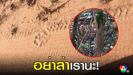 ฮือฮาพบเสือโคร่งกลางอุทยานแห่งชาติปางสีดา