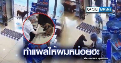 ฉลาดเป็นกรด! เจ้าหมาเข้าร้านยา ยื่นขาที่เป็นแผลให้คุณหมอช่วยรักษา