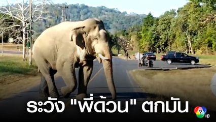 เตือนท่องเที่ยวเขาใหญ่ระวังช้างป่าตกมัน