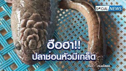 ฮือฮาทั้งโซเชียล!! พบปลาช่อนสุดแปลกตา มีเกล็ดที่หัวคล้ายดอกไม้ ชาวเน็ตแห่ซูมดู