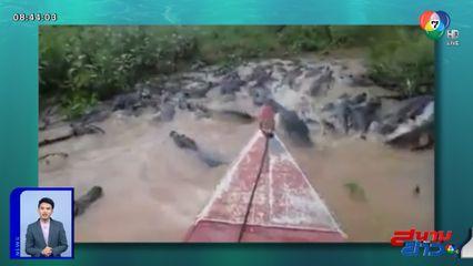 ภาพเป็นข่าว : หัวใจจะวาย! หนุ่มล่องเรือฝ่าดงจระเข้ในบราซิล