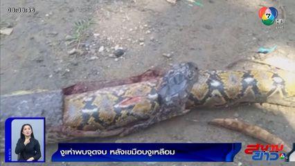 ภาพเป็นข่าว : งูเห่าพบจุดจบ หลังเขมือบงูเหลือมเข้าไปทั้งตัว