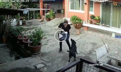สุดฮา! สาวโอดขอชาวเน็ต แนะวิธีให้สุนัขไม่เล่น หลังอาบน้ำเสร็จ-มีธุระ