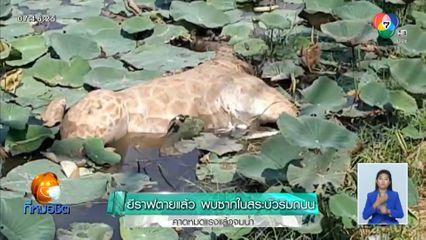 ยีราฟตายแล้ว พบซากในสระบัวริมถนน คาดหมดแรงแล้วจมน้ำ