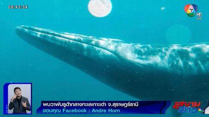 ภาพเป็นข่าว : นักท่องเที่ยวปลื้ม! พบวาฬบรูด้ากลางทะเลเกาะเต่า ราวกับฝันเป็นจริง