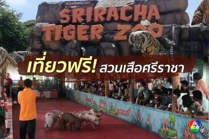 สวนเสือศีราชาเปิดให้เที่ยวฟรีถึงสิ้นเดือน มิ.ย.นี้