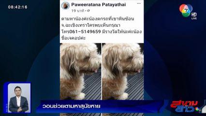 ภาพเป็นข่าว : เจ้าของวอนช่วยตามหาสุนัขหาย หลังพลัดตกจากรถกระบะ