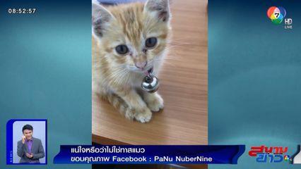 ภาพเป็นข่าว : แน่ใจหรือว่าไม่ใช่ทาสแมว!?