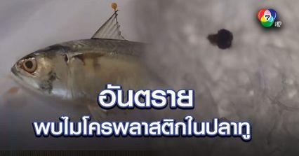 พบไมโครพลาสติกในปลาทู ชี้อันตรายขยะทะเล ส่งผลกระทบได้ในคน