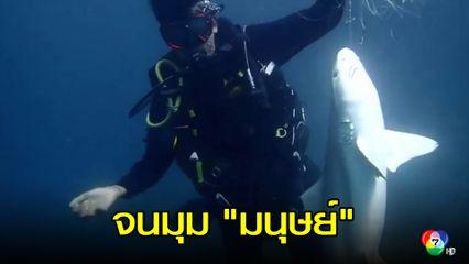 จนมุมมนุษย์! พบซากฉลามหูดำ ติดเบ็ดราว