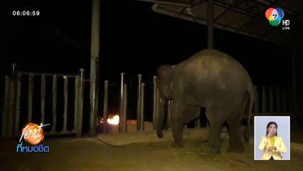 มูลนิธิเพื่อนช้างก่อกองไฟและห่มผ้าให้ช้างคลายความหนาวเย็น