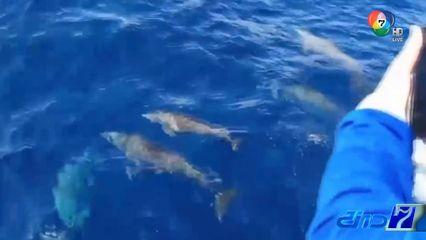 ฮือฮา! ฝูงโลมาปากขวดกว่า 30 ตัว โผล่เกาะสิมิลัน จ.พังงา